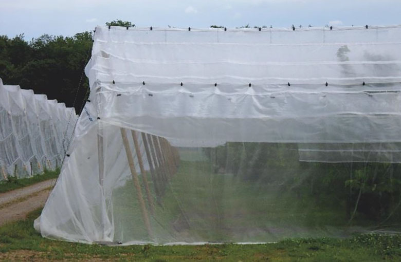 Insect nets - fruit cover